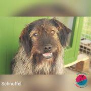 Schnuffel - Der Unnahbare