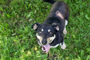 JULANO - ein lebhafter quirliger Junghund
