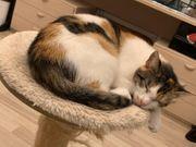 suche Kätzchen Katze entlaufen