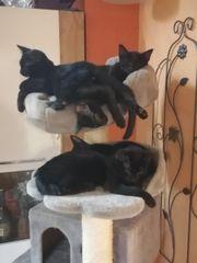 Helloween Katzen Teenager suchen Spielplatz