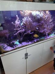 Aquarium zu verkaufen