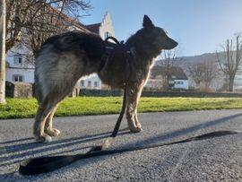 Tierbetreuung - Tierbetreuung Lochau Umgebung