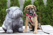 Tierschutzhündin Latoya sucht ein Zuhause