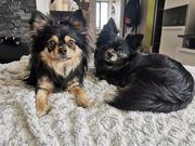 Koda und Miko suchen ein