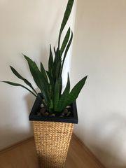 Blume Rattern Ca 70cm x
