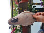 Weißhaubenkakaduhenne