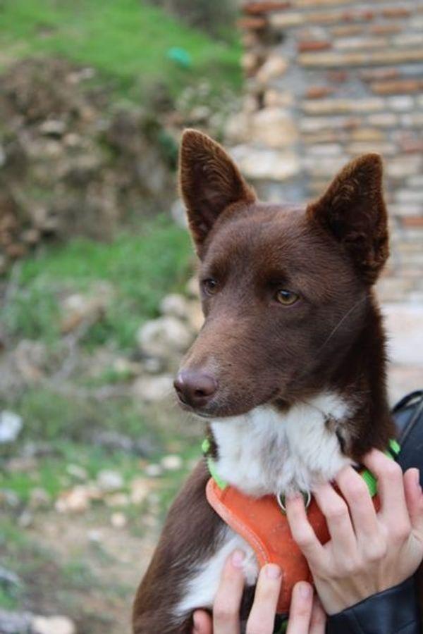 Abi1, aktiver junger Hundebub sucht sein Zuhause