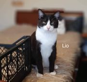 Lio und Lia möchten zusammen