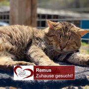 Remus sucht Ruhe in einem