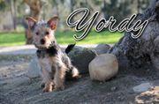 Sucht Yordy nach Ihnen