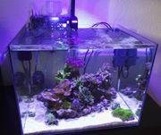 Kleines Meerwasser-Aquarium 55 L komplett