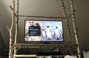 TV Möbel Birkenstämme Birkenbaumstamm Birkenast