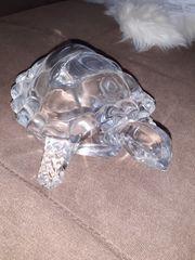 Schildkröte aus Glas
