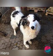 Hero - Heldenhafter Hund sucht Geheimversteck