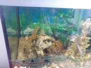 300 Liter Aquarium komplett mit