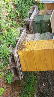 Bienen Beuten Zander 20 Rämchen