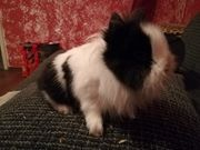 Tolle Lowenkopf Kaninchen und alles