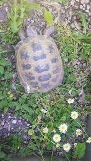 vierzehn landschildkröten