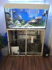 Meerwasser Salzwasser Aquarium mit Zubehör