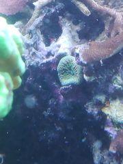 verschiedene Korallen und Gestein