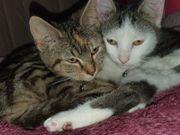 2 junge Katzen in liebevolle