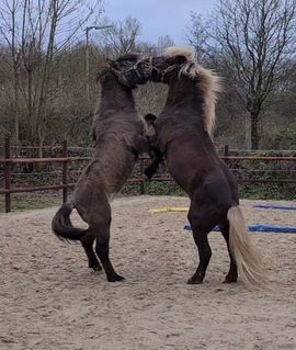 Pferde - ASKUR