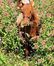 Reitbeteiligung gesucht Pferd sucht Reiter