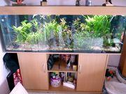 Aquarium ca 450 Liter
