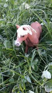Pflegebeteiligung oder Reitbeteiligung Pony Pony