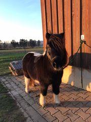 Ponyreiten in Palmbach