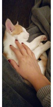 Katzenbaby 13 Wochen alt in