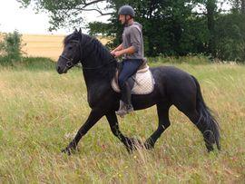 Ständig Fahr-u Freizeitpferde: Kleinanzeigen aus Buttstädt - Rubrik Pferde