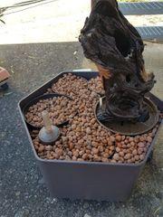 Großer Pflanzkübel inkl Hydrokultur-Kugeln