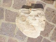 Versteinertes Holz aus Antigua