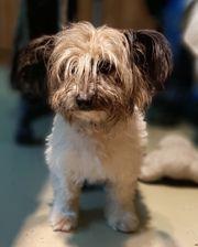 CHEBA - der perfekte Familienhund