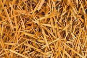 13 Rundballen Weizenstroh Einstreu