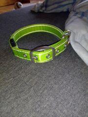 grünes halsband mit grün farbigen