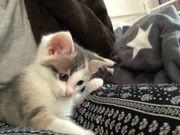 Kleine Mischlingskatze zu verkaufen