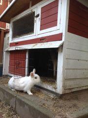 Hasen oder Kaninchenhaus