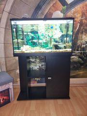 Aquarium zum verkaufen mit Inhalt