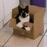Katze sucht neues Zuhause auf