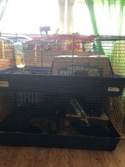 Kaninchen mit Käfig