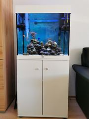 Meereswasseraquarium