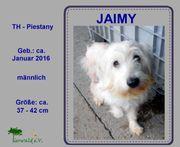 JAIMY Ein aktiver und neugieriger