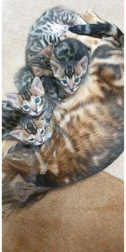 Katzen Kaufen Und Verkaufen Bei Quoka De