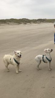 Hundebetreuung für Urlaub gesucht