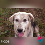 Hope - Er verlor fast sein