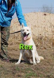 Rüde Rex sucht sein Zuhause