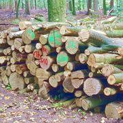 Buchen Brennholz 29 EUR rm