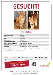 Tiger wird immer noch vermisst